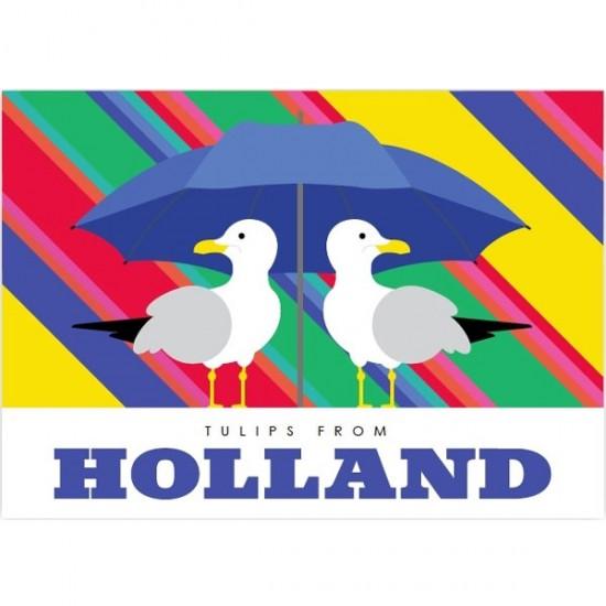 Postcard tulips from holland modern rainbow