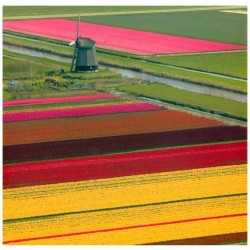 POSTCARD HOLLAND 15 x 15 CM - 2794