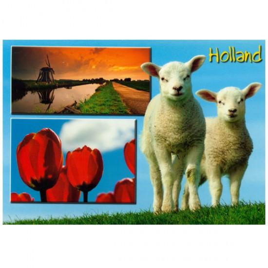 Postcard holland a6 lambs - 25708