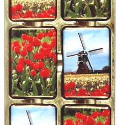 CHOCOLATE BLISTER STRIP TULIPS WINDMILL